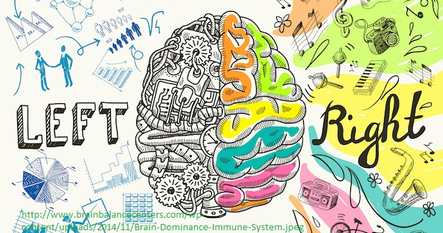 Brain left analytical and right creative hemispheres sketch concept vector illustration